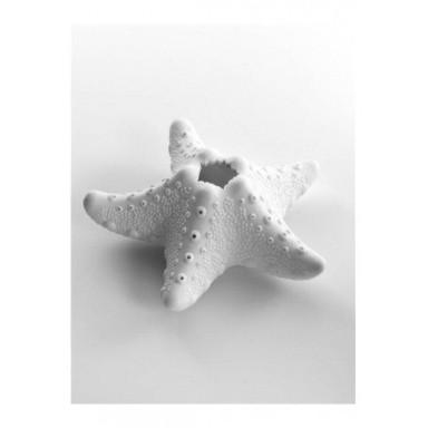 Vela Estrella de Mar Decoración (4u)