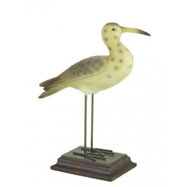 Pájaro Courlis Marino