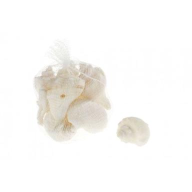Caracoles de Mar Melongenidae Blanca (6u)